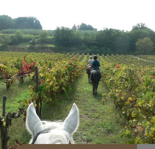 riding in italy, News from Rendola, Italy, In The Saddle