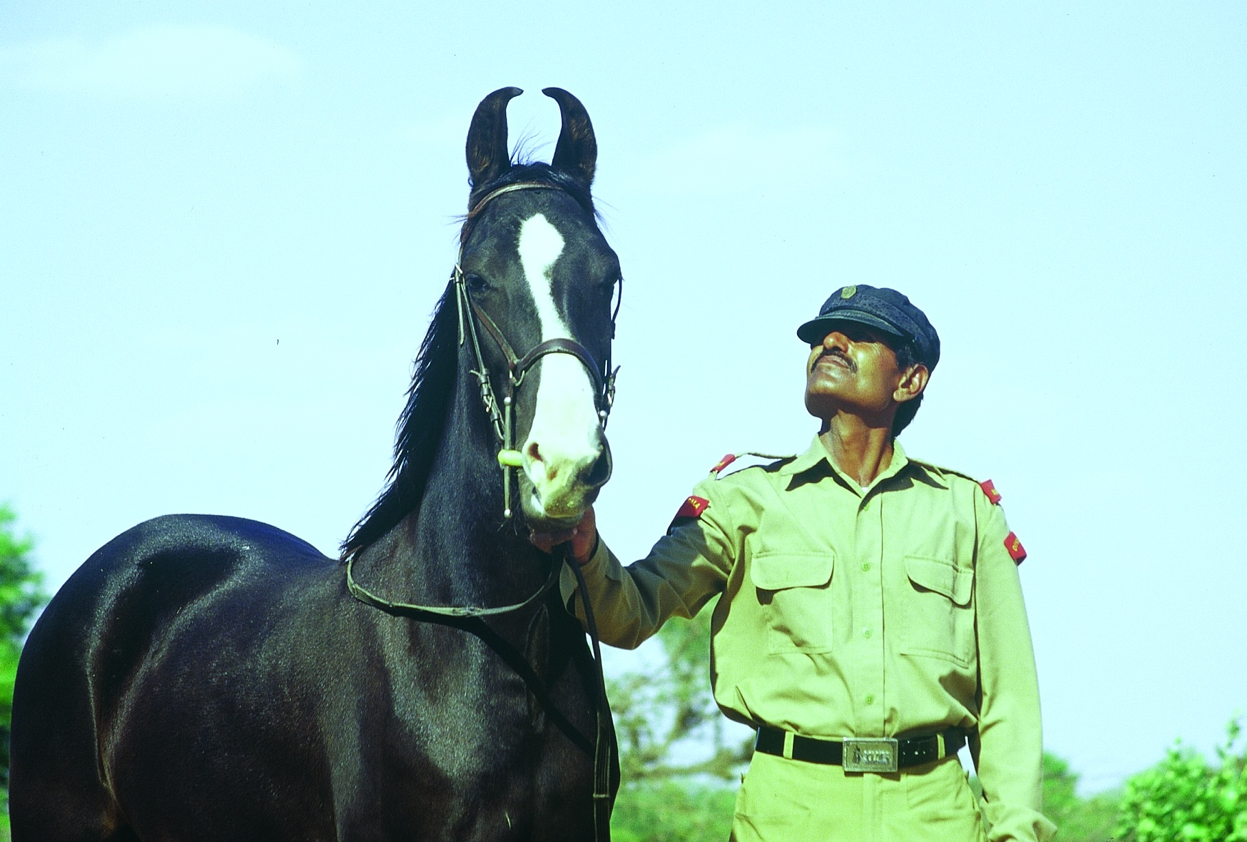 Travel The World In Horse Breeds Indulge In India In