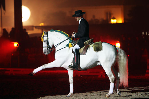 Classical dressage at Golegã Horse Fair