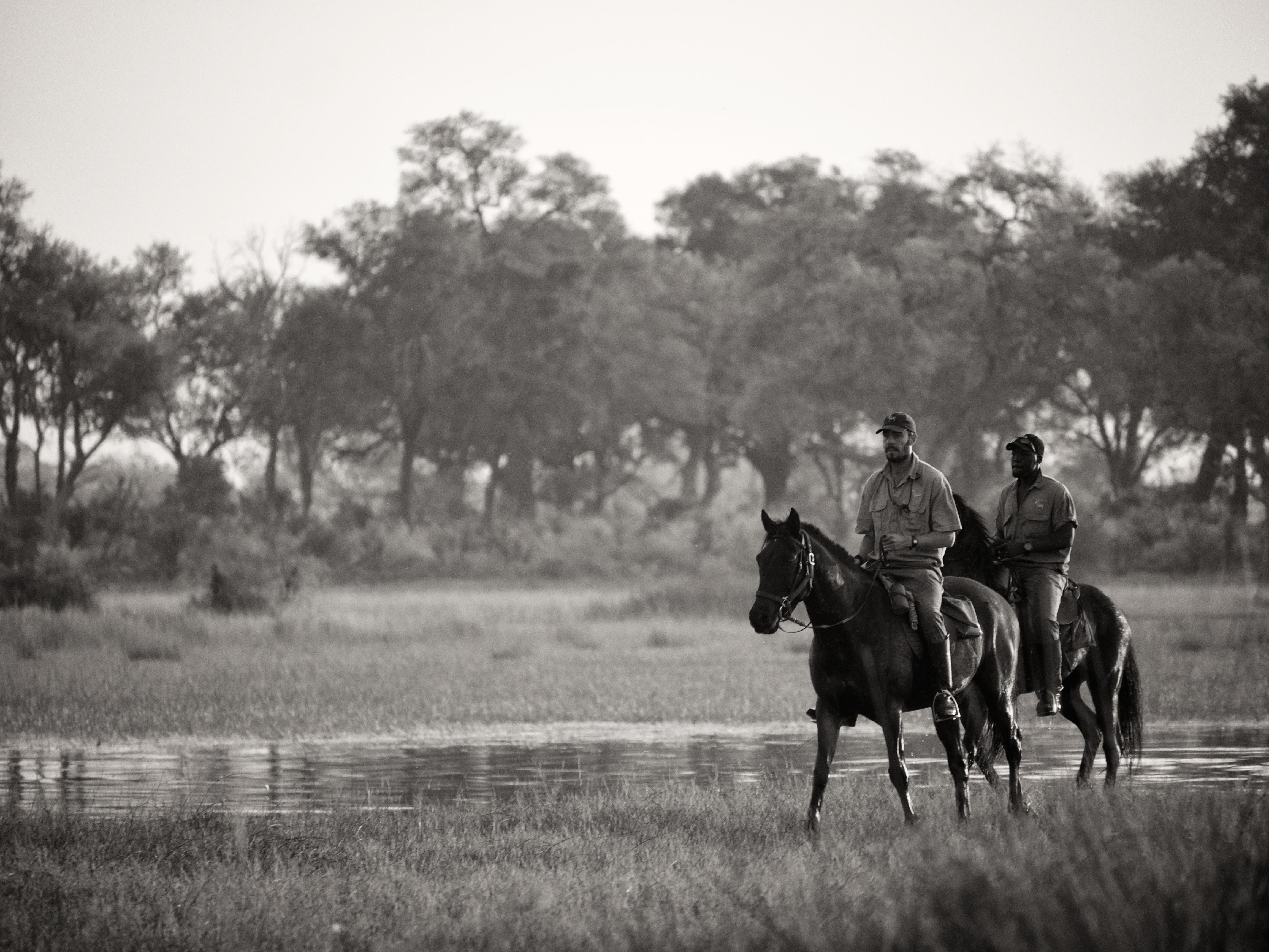 safari guide in botswana