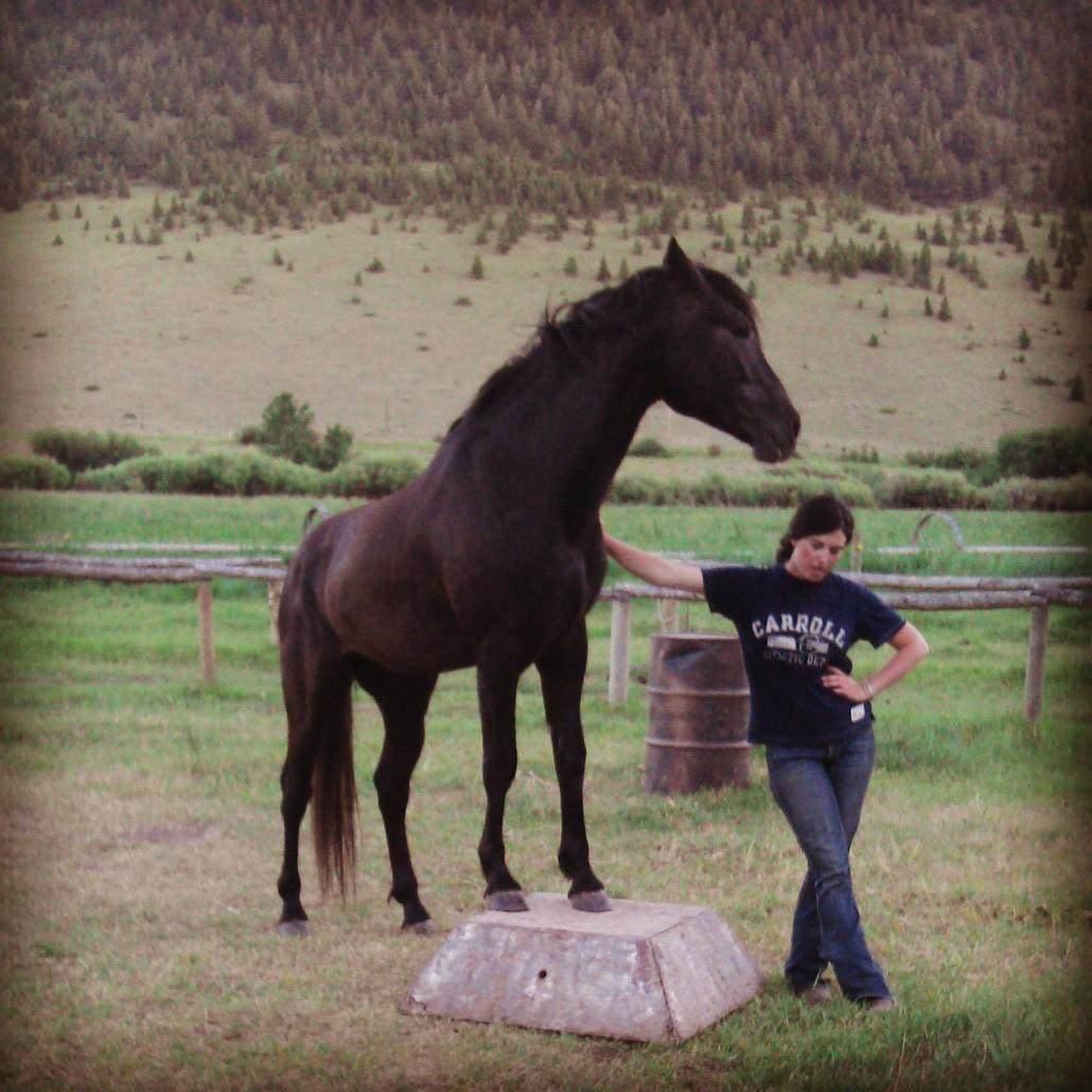 my favourite horses