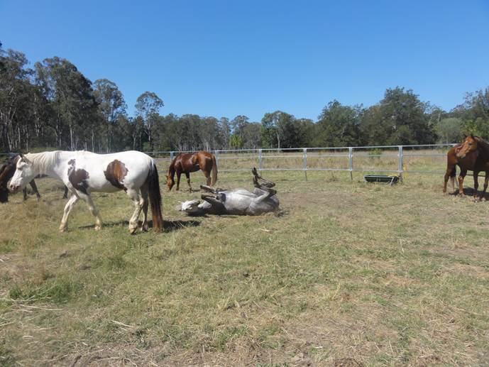 The horses relaxing at Edenview