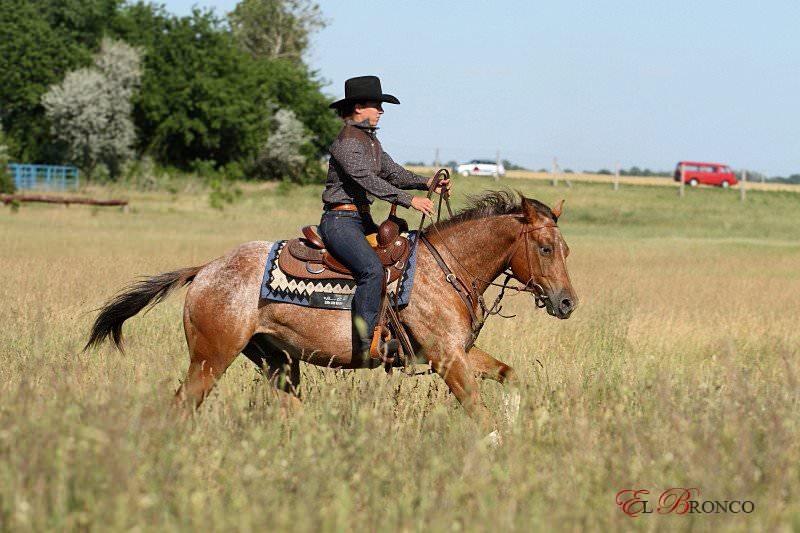 El Bronco Ranch