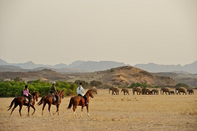 DE Ellies and horses