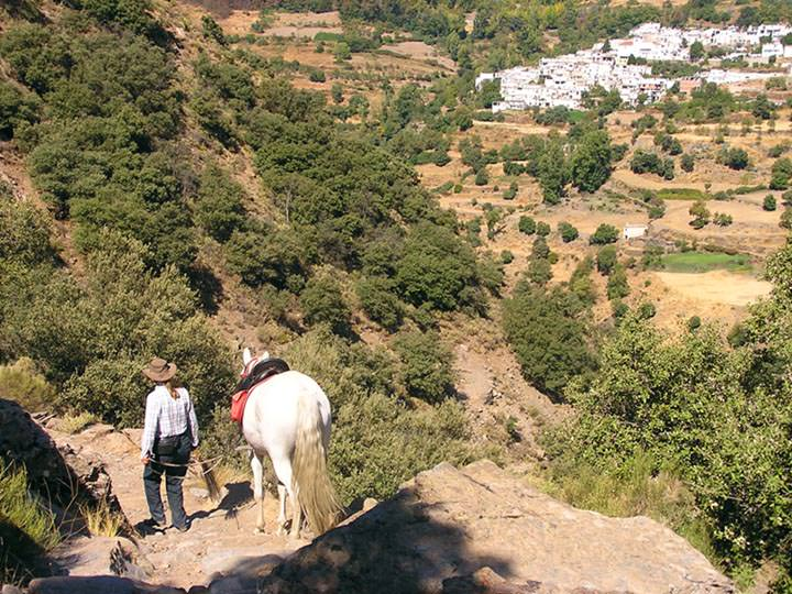sierra nevada mountains, Incredible Andalucians, In The Saddle