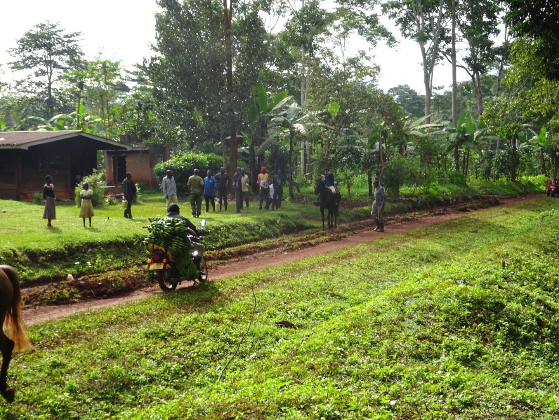 rainforest communities