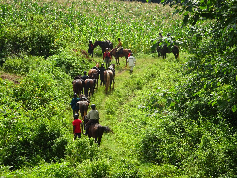 rainforest on horseback