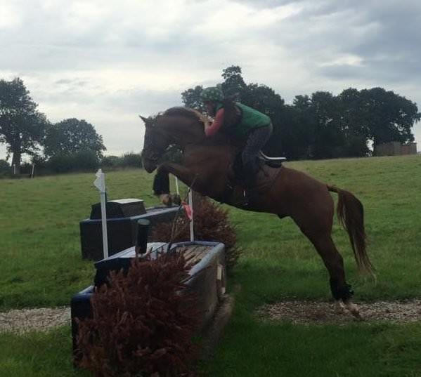Finest Star (Romeo) during his first ever attempt at XC