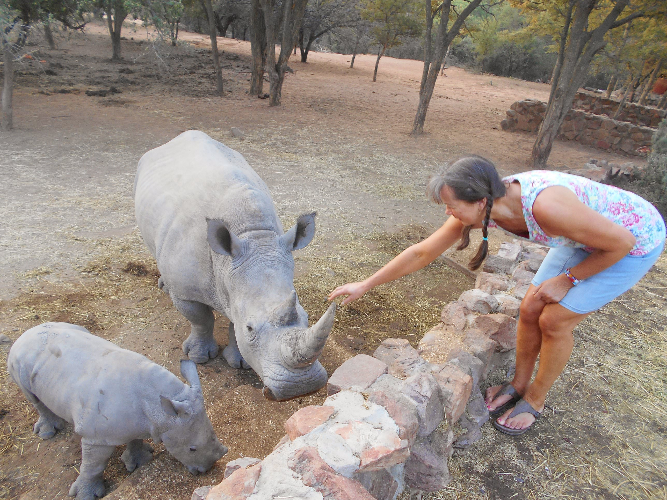 Meeting the magical white rhino up close - baby 'Scorcher' to the left