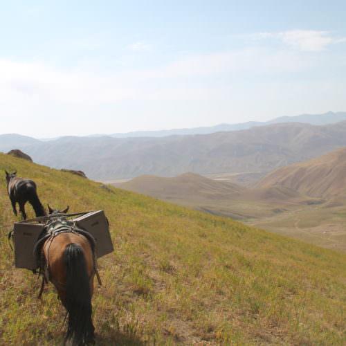 Kyrgyzstan, Discovering Kyrgyzstan, In The Saddle