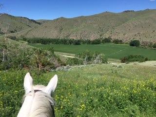 Rocking Z Ranch