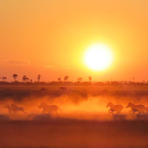 The Kalahari Riding Safari in the Makgadikgadi salt pans of Botswana. Horses, zebra, sunset.