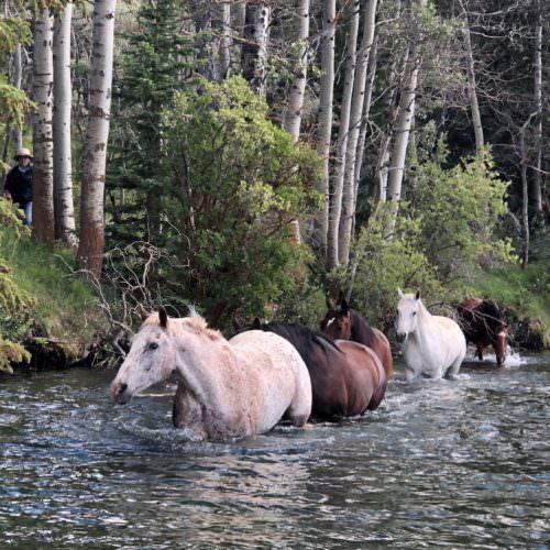 horses at Tsylos