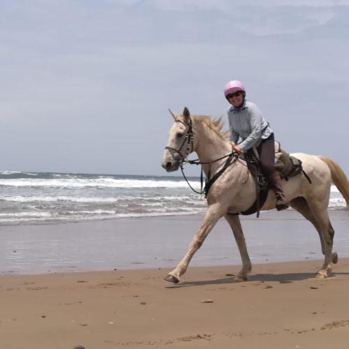 Horses and Wild Coast