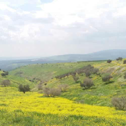 Israel spring flowers