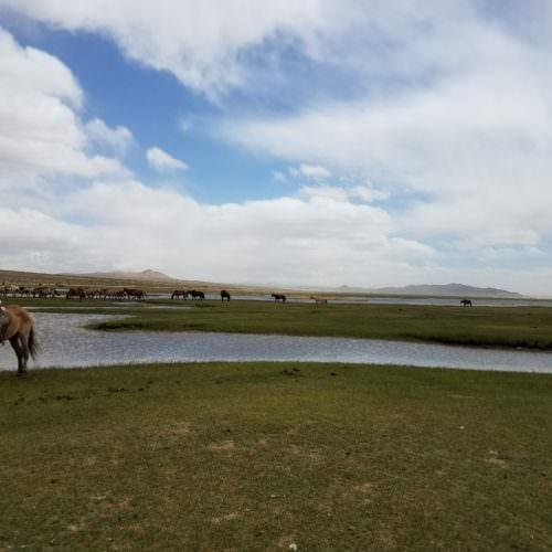 Mongolia horses Orkhon Vally