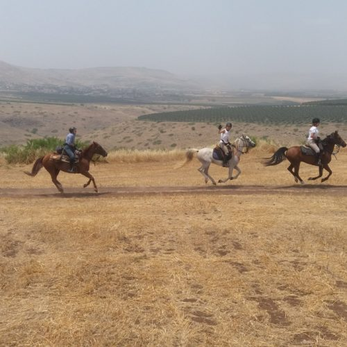 Cantering in Israel