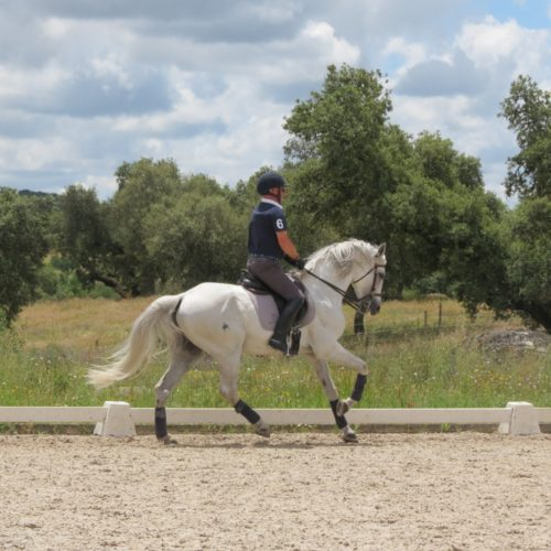 dressage on Lusitano