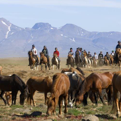 Iceland kjolur horses