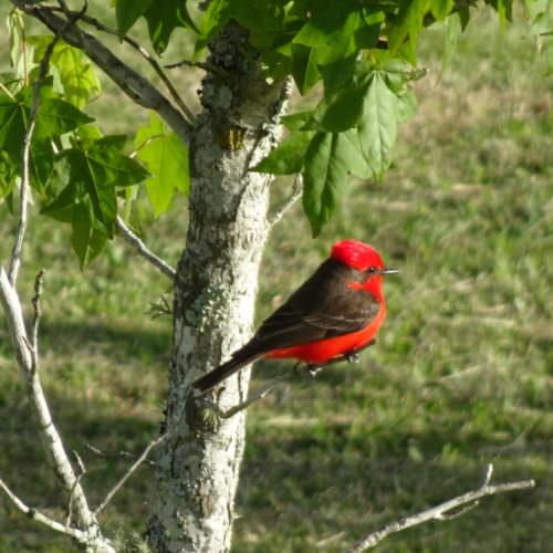 Uruguay - bird