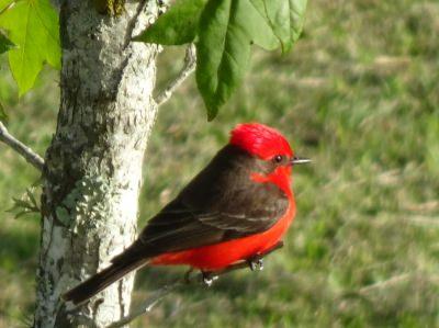 Painted Birds Trail - Uruguay
