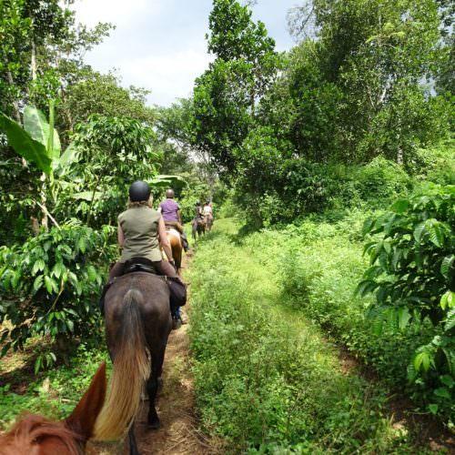 Horses in Uganda