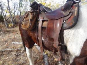 Tsylos saddle