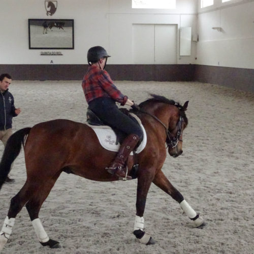 dressage lessons in Portugal