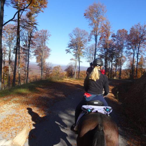 Ride through varied terrain