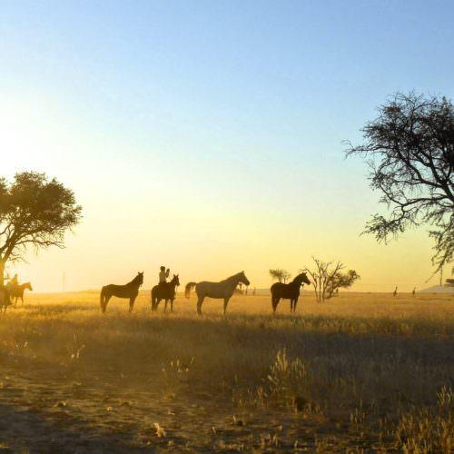 Horses at sunset Namibia