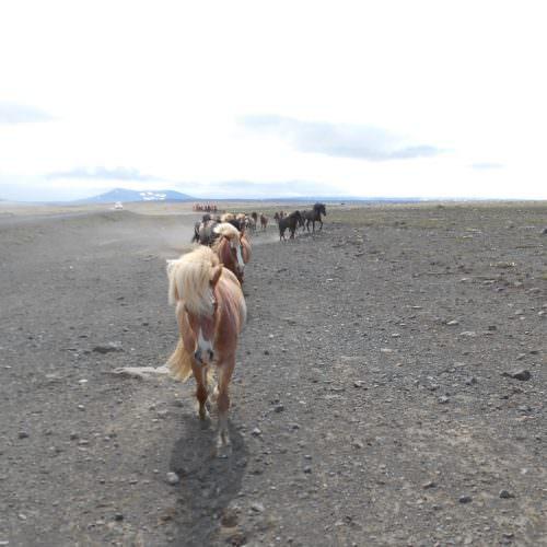 Iceland on the Kjolur
