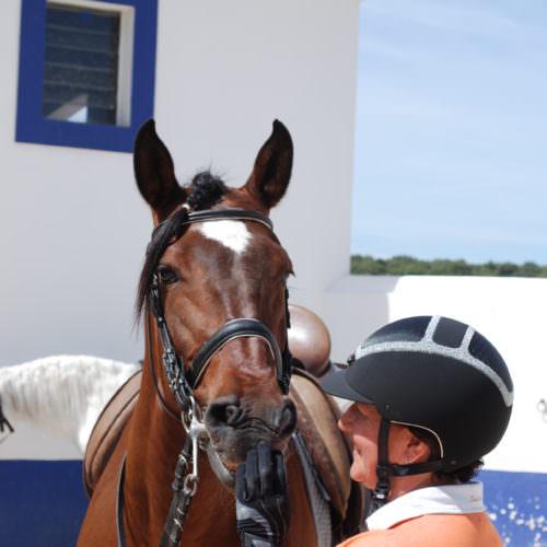 Bay horse and rider