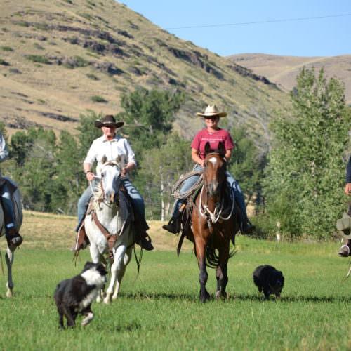 Riding across a meadow