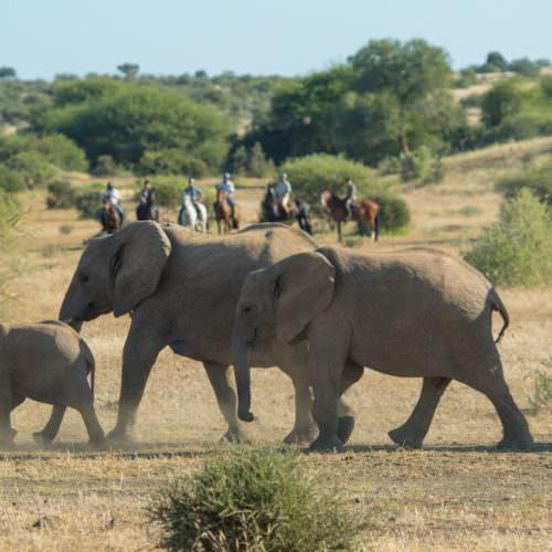 African Explorer Horseback Safari