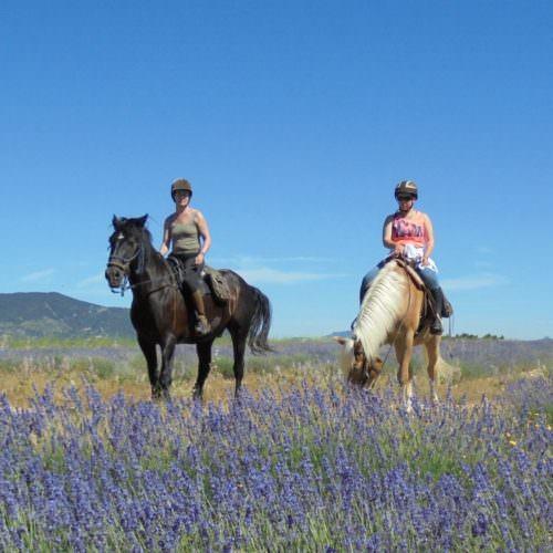 Riding gjennom lavendar i Provence