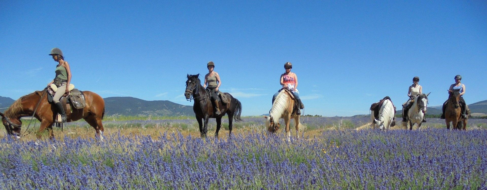 Riding through the lavendar in Provence