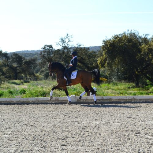 dressage; passage; riding holiday; Monte Velho