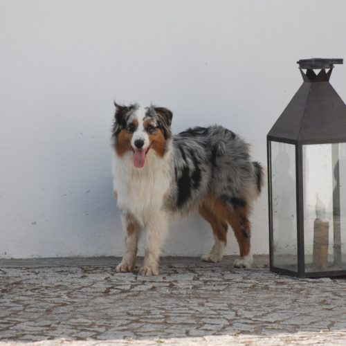 Dog in portugal