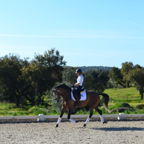 Portugal, Horse Riding, Dressage