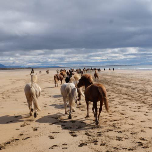 Snæfellsnes beach riding