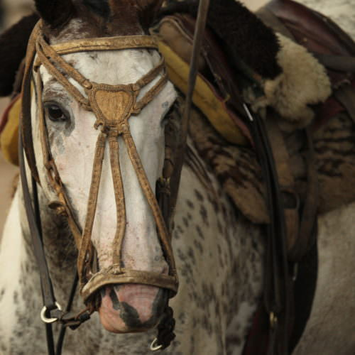 Top quality horses, traditional tack in Argentina. Los Potreros.