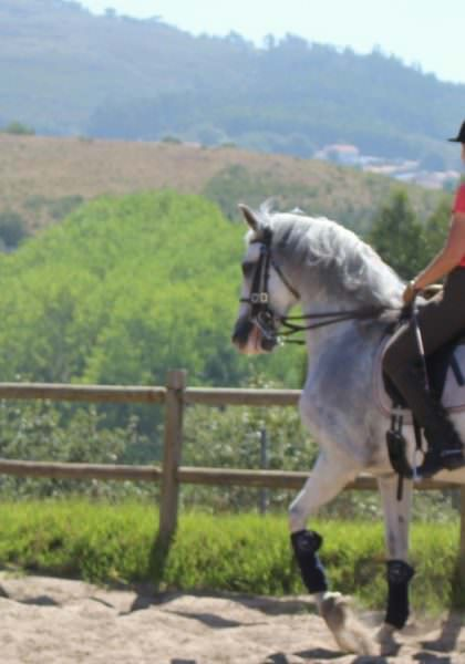 Dressage insruction in Portugal