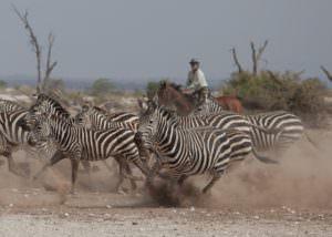 Kaskazi Tanzania