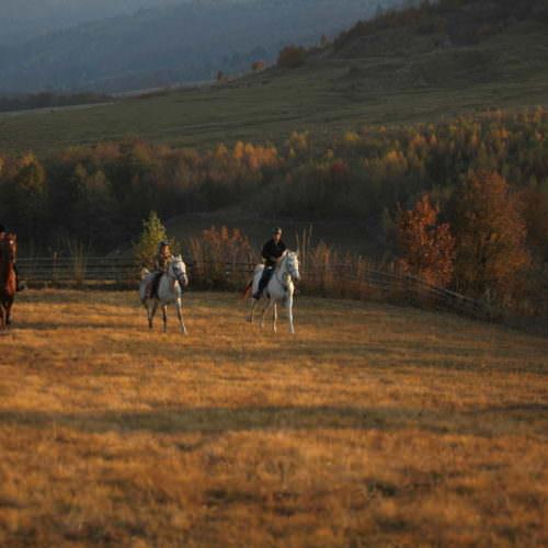 Cantering across fields