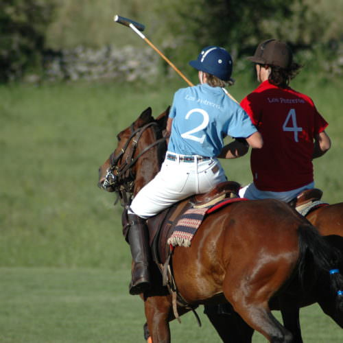Polo in Argentina. Two polo ponies on the field.
