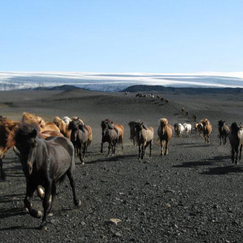 Iceland riding glacier