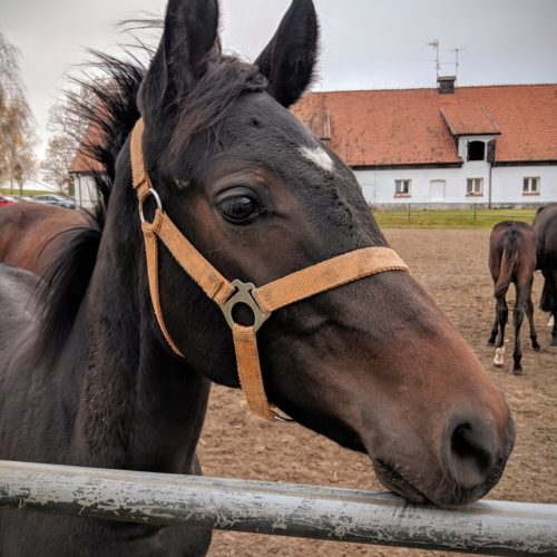 Foal in Poland