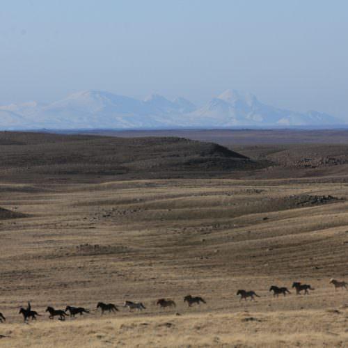 Iceland riding desert