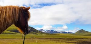 Iceland horse view