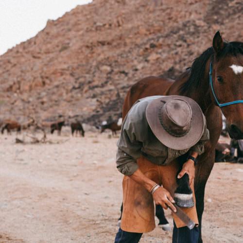 Horse shoeing Namibia